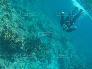 沖縄 慶良間諸島 シュノーケリングの写真・画像素材[3154449]