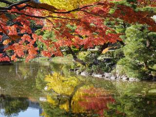 水面にうつる紅葉の写真・画像素材[3155224]