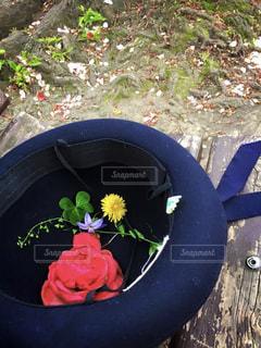 幼稚園帽に入れた草花の写真・画像素材[3321670]