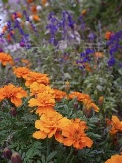 秋の庭の写真・画像素材[3899406]