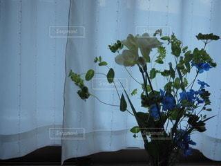 花のある暮らしの写真・画像素材[3155552]