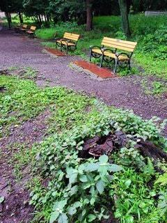 雨の日の公園の写真・画像素材[3155778]