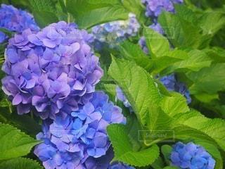花のクローズアップの写真・画像素材[3391515]