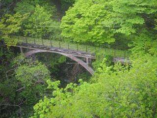緑豊かな森の上の橋の写真・画像素材[3391532]