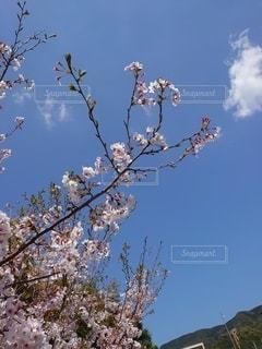 長崎 公園 春の写真・画像素材[3157089]