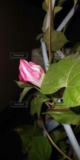 緑の植物のクローズアップの写真・画像素材[3157476]
