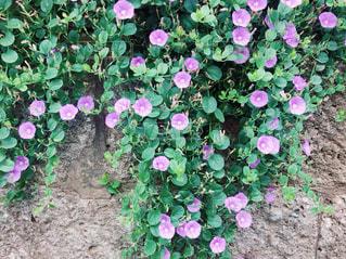 花の写真・画像素材[3163820]