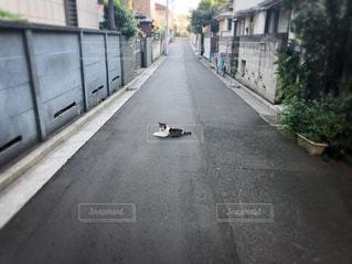 猫の写真・画像素材[3163834]