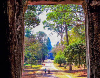 密林に佇むカンボジアの至宝の写真・画像素材[3159998]