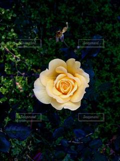自然の写真・画像素材[134965]