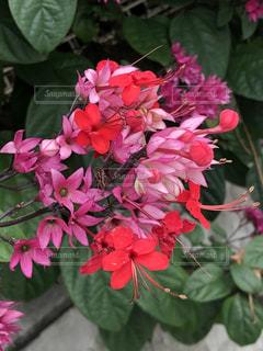 一輪の花の写真・画像素材[3159595]