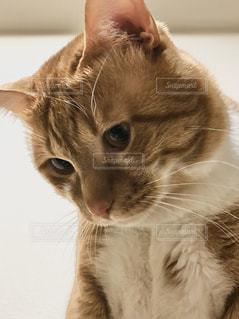 猫のクローズアップの写真・画像素材[3160359]