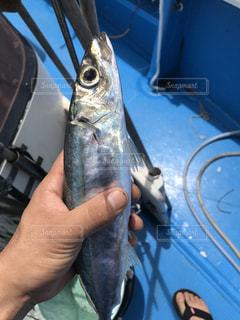 魚を持つ手の写真・画像素材[3187164]