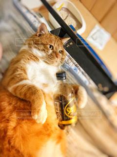 コーヒー片手の猫の写真・画像素材[3232657]