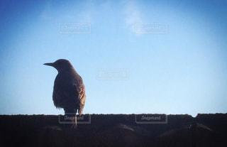 鳥の写真・画像素材[3191809]