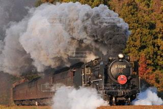 正月限定の蒸気機関車の写真・画像素材[3161716]