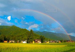 田んぼの上の虹の写真・画像素材[3270947]
