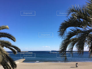 ヤシの木とビーチの写真・画像素材[1446448]