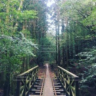 森の木造橋の写真・画像素材[3165792]