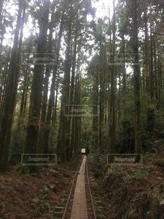 森の中の木の写真・画像素材[3165842]
