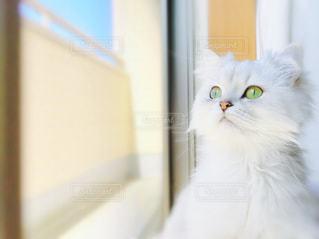 猫の写真・画像素材[126812]