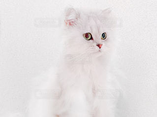 No.131884 猫