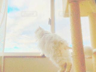 猫の写真・画像素材[134892]