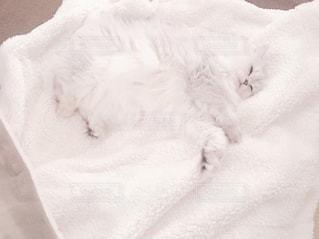 毛布の上で眠っている猫の写真・画像素材[844337]