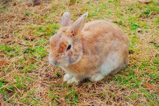 ウサギの写真・画像素材[846613]