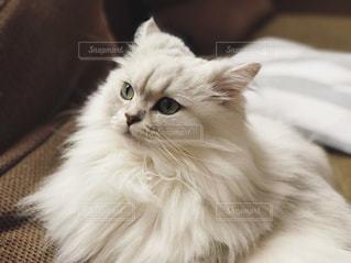 近くに猫のアップの写真・画像素材[879205]