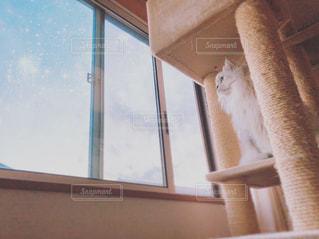 ウィンドウの横に座っている猫の写真・画像素材[903169]