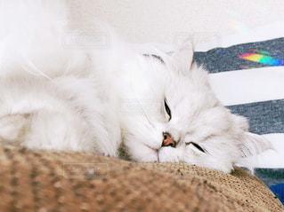ベッドの上で横になっている猫の写真・画像素材[1145165]