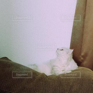 見つめるネコの写真・画像素材[1422707]