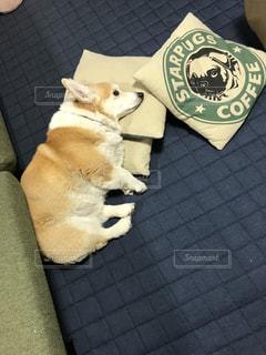 寛ぐ犬の写真・画像素材[3166355]