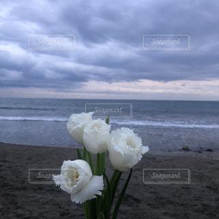 浜辺の白い花の写真・画像素材[3166394]