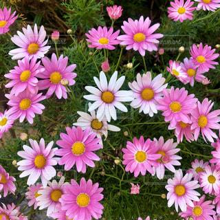 花の写真・画像素材[3166869]