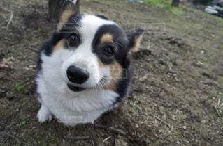 散歩中の犬の写真・画像素材[3248199]
