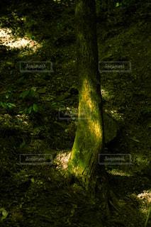 森の写真・画像素材[3307164]