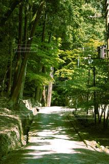 森の写真・画像素材[3307167]