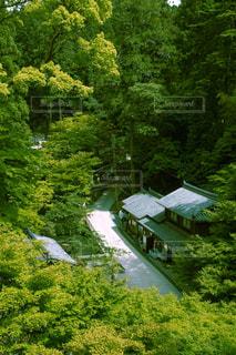 緑豊かな森の近くの写真・画像素材[3307165]