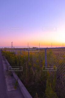 フェンスごしの世界の写真・画像素材[3796139]