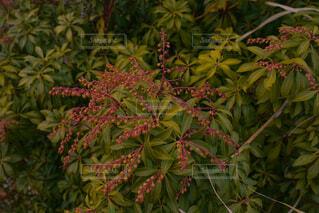 植物のクローズアップの写真・画像素材[4607758]