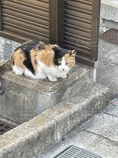 休憩中の猫の写真・画像素材[4607741]
