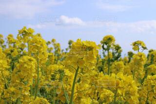 黄色い植物の写真・画像素材[4615965]
