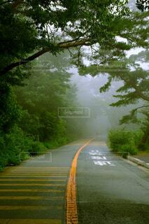 道路、霧の写真・画像素材[4629377]