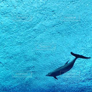 飛ぶイルカの写真・画像素材[3170681]