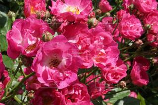 花のクローズアップの写真・画像素材[3170838]
