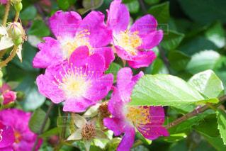 花の紫の写真・画像素材[3170855]