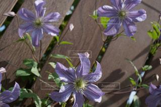 紫色の花で満たされるの写真・画像素材[3170872]
