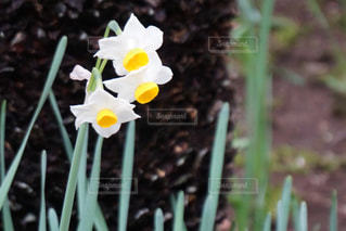 花の写真・画像素材[3170897]